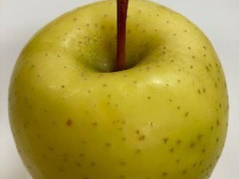 ✨希少品種!星の金貨✨果汁たっぷり❤小玉 2.5kg