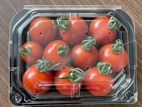 【愛知限定】とげなし茄子(18本セット)と【お試しパック】愛情たっぷりbaby tomato 400gセット