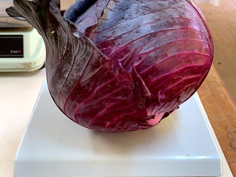 JAS認証 有機栽培 赤キャベツ1玉 とんがりキャベツ1玉 グリーンリーフ1玉 ほうれん草500g 水菜500g