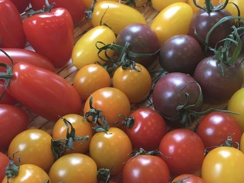 自家農園産レインボーミニトマトの詰め合わせセット