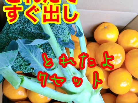 緑の野菜&果物箱 獲れたて直送ブロッコリ&訳ありはるみ蜜柑セット