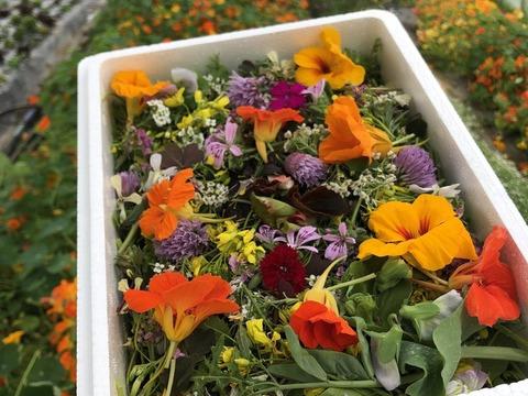 【母の日ギフト】食用花とベビーリーフのセット