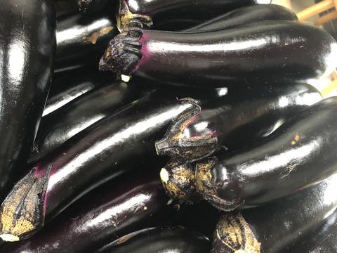 露地栽培 無農薬  筑陽 茄子🍆 4.5キロ詰