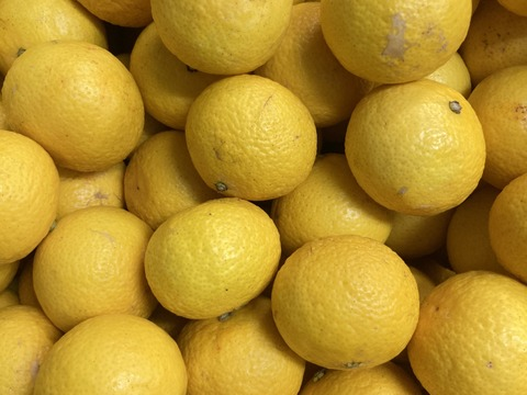 【希少】湘南ゴールド(露地)B品 家庭用混合サイズS ~Lサイズ2kg【幻のオレンジ】