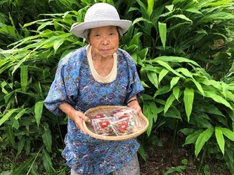 【自然栽培】シャキシャキみょうが ミョウガたっぷり使える200~250g×2パック約500gお 薬味に味噌汁や天ぷらなど。期間限定お早めに