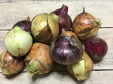 【自然栽培】ねこ農園の新玉ねぎ赤白ミックス4kg【小さめですが!】