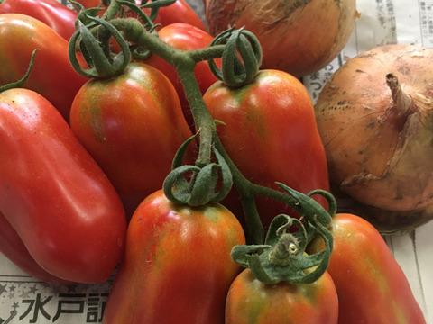 お家で手作り!トマトソースキット