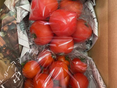 トマトの食べ比べセット
