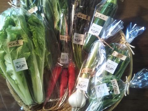 自然栽培野菜一人暮らしの方にオススメセット 8月16日~8月30日の期間中にお届け商品