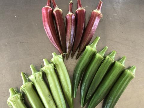 ネバネバが美味しい!旬のお野菜★オクラ★3種食べ比べ(約200g)