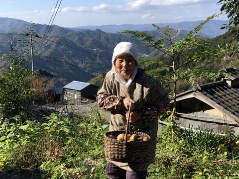 今の季節だけ無農薬キウイ(2~2.5kg 約30個 60サイズ段ボール詰め)