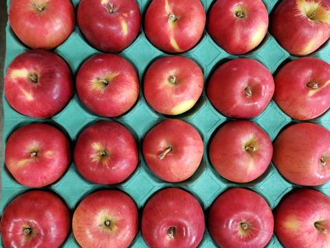 ※期間限定※お菓子作りに✨ 酸味りんごの代表品種☆「紅玉」 小玉ー超小玉  25ー30個