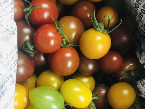 【数量限定】完熟カラフルミニトマト詰め合わせ【3kg】