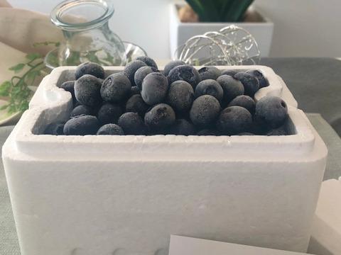 ✿冷凍ブルーベリー✿ 大粒450g ❃2021年度収穫❃農薬不使用
