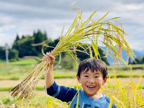 ササシグレ 真空パック包装 無農薬 無化学肥料 弱アルカリ性のお米 無洗米 合鴨農法 長野 令和3年産