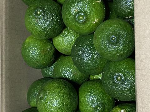 清流で育った今が旬の青柚子1~2kg