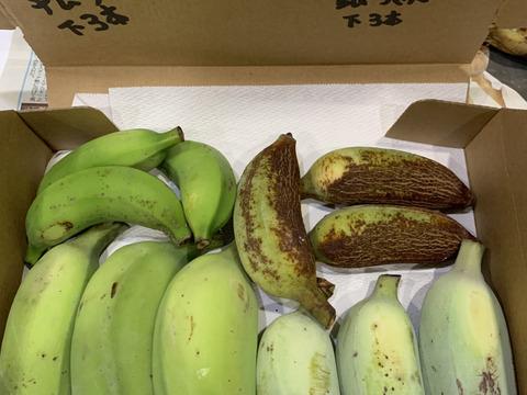 予約販売3ヶ月〔自然栽培〕お試し ワクワクバナナ