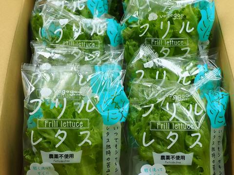 【限定】10袋入り新鮮!シャキシャキ「リーフレタス」LED光植物工場栽培 1箱10袋(1袋60g程度)入り