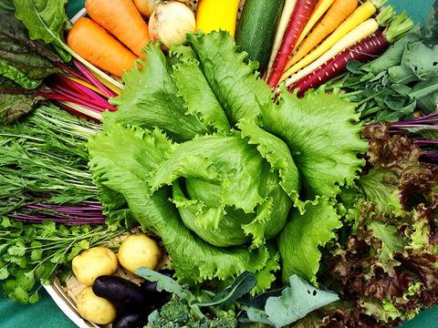 季節のふもとも野菜セットM(7〜8品)+もち麦(きはだもち)精麦300g同梱セット