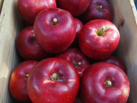 りんご(シナノスイート5キロ・シナノゴールド5キロ)5キロ×2箱