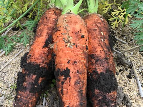 農薬不使用・化学肥料不使用土付き人参 3kg &玄米粉 2kg