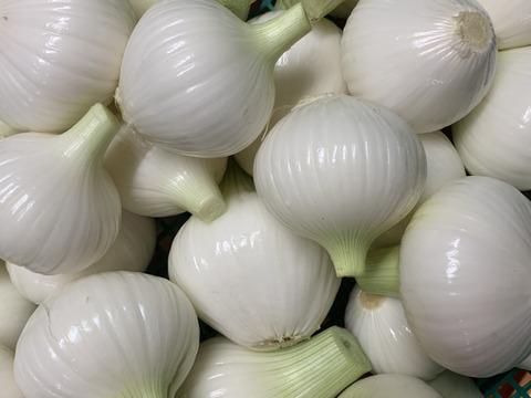 ‼️訳有り白剥きお買い得‼️淡路島玉ねぎ白剥き2.5kg‼️主婦の味方❗️生ゴミ無し❗️即使える🧅特別栽培農産物