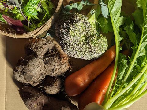 【農薬化学肥料不使用】四季のとれたて野菜少量セット(約6-7種)
