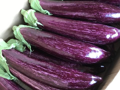 ブランド茄子【りんごあめ】ゼブラ茄子 〜鮮やかな紫〜