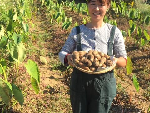 ねっとりコクがある❗️掘り立て❗️白里芋2kg【長崎五島こばさんち産】