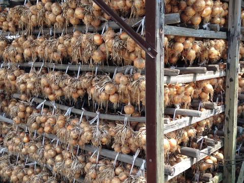 淡路島極熟玉葱5kg🧅玉ねぎ大国淡路島からの玉ねぎ5kg