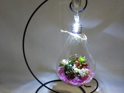 多肉植物 ナイト・テラリウム 電球型