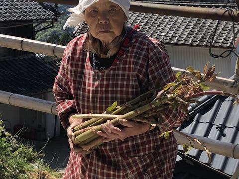 【天然無農薬】春の山菜 いたどり イタドリ 200g×5 下処理済み塩漬けを冷凍シャキシャキ食感