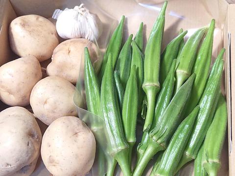 旬の夏野菜  ♪♪ オクラの健康パワー ♪♪がすごい! 【無農薬】(オクラ、ジャガイモ、ニンニクの3品目セット)