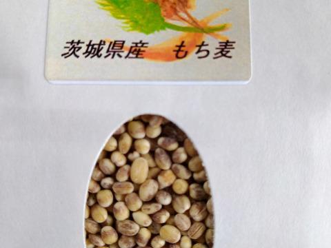 もち麦 ダイシモチ 令和2年産 農薬、化学肥料 未使用