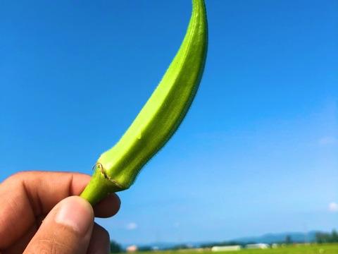 【食べごろサイズ】収穫当日発送!ミナトンのヘルシー角オクラ!【農カード付き】(500g以上)