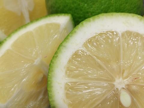 自然農法 SUN2グリーンレモン(農薬・肥料不使用) 2kg