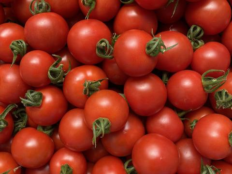 【お試しパック】愛情たっぷりbaby tomato 400g ‐★★★‐
