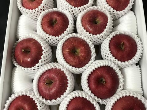 青森県産りんご「サンふじ」贈答用 約5kg 2セット