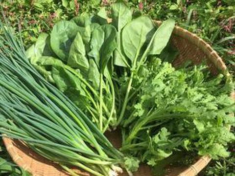 10月のおすすめ野菜3種セット(9袋)