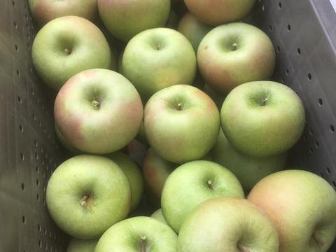 本格アップルパイにどうぞ!酸味のきいた青りんご、グラニースミス自家用3キロ