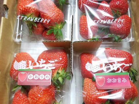 最高糖度19度!! 兵庫県産 高糖度イチゴ  1パック約300g×4  多品種あります。