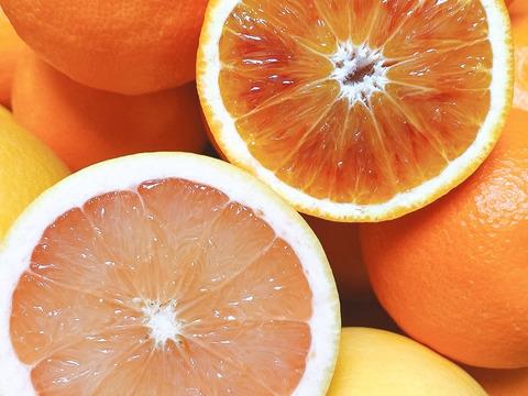 セットS*グレープフルーツとブラッドオレンジ2.5K