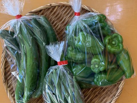 旬の採りたて野菜3種類お試しセット:part1(数量限定です)