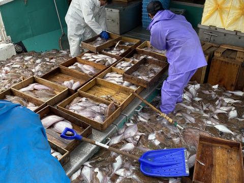 漁師セット❗️時期によっての旬の物を入れた鮮魚セット