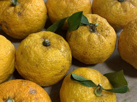 おまけつき!冬至に!柚子20個【農薬、化学肥料、除草剤不使用】