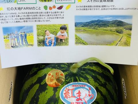 シャリっと甘い‼︎熊本県産大玉すいか1玉入り(8kg前後)