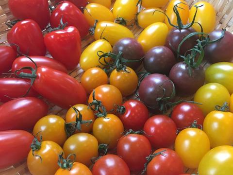 色鮮やか10種から厳選7種以上のミニトマト(200g12パック入り)