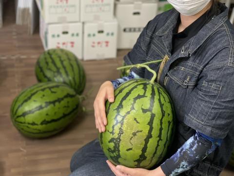 訳あり‼︎熊本県産大玉すいか2玉入り(1玉9kg前後)