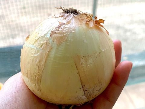 JAS認証 有機栽培 玉ねぎ(1kg)