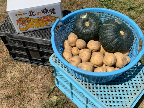 【北海道産】美食家をうならせる!ねっとり甘~いカボチャ!男爵イモセット!Lサイズ5kg・かぼちゃ1.5kg×2個 セット